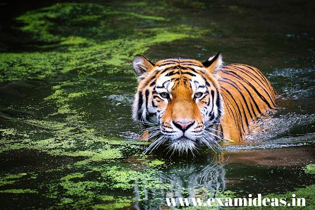 Major sanctuaries of Jharkhand - झारखंड  के प्रमुख अभ्यारण