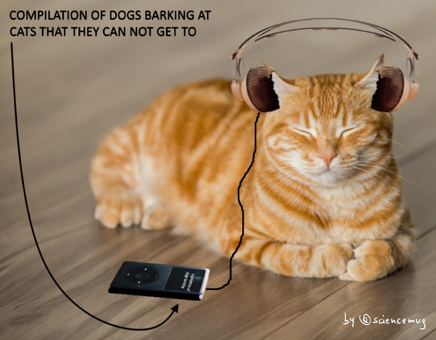 A cat listening to relaxing cat-specific music (by @sciencmeug)