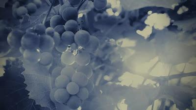 image-vine-grapes