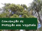 Convenção de Proteção as Vegetais. Fonte: Autor