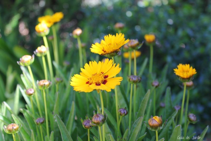15 Plantas Con Flores U Hojas Amarillas Guia De Jardin