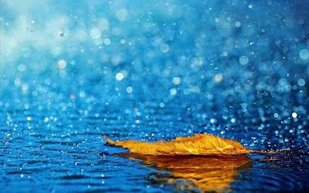 Γιατί μυρίζει η βροχή και πότε η οσμή είναι εντονότερη;
