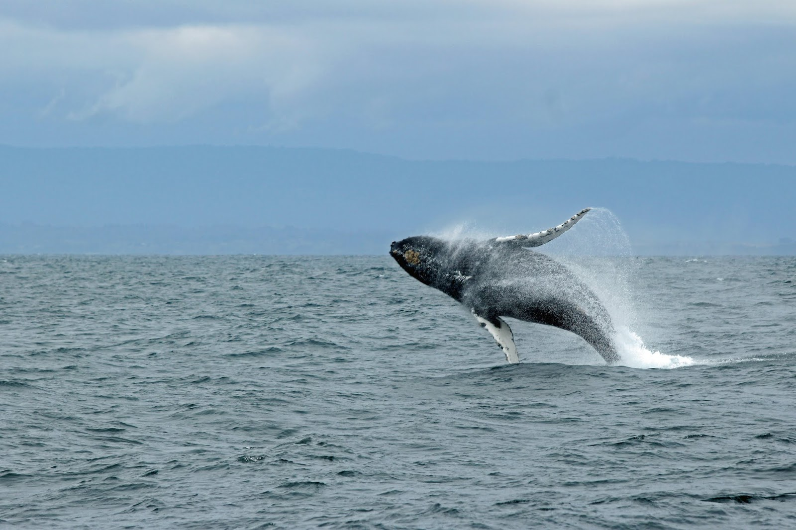 100+ Whales HD Pictures - World Most Intelligent 4th Animals