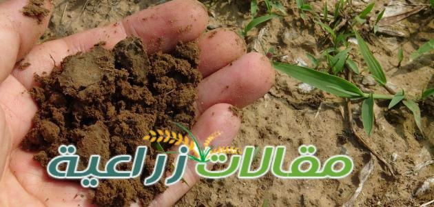 ماذا يحدث عند ارتفاع PH التربة عن 8 - مقالات زراعية