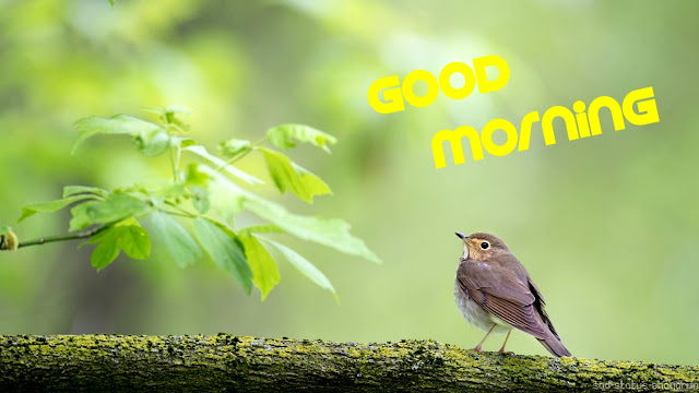 Good morning image beautiful bird