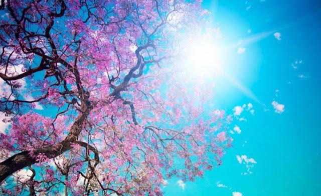 Με μίνι καλοκαίρι το ψήσιμο του οβελία - Πρόγνωση του καιρού μέχρι και την Παρακσευή