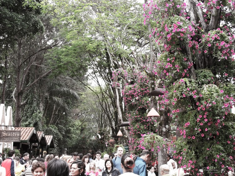 multidão festival expoflora
