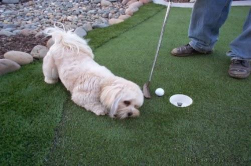 césped artificial especial para mascotas