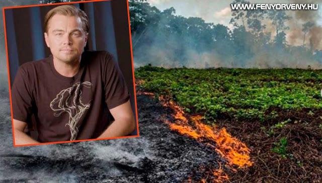 Leonardo DiCaprio eddig 1,5 milliárdot szánt az amazonasi esőerdő megmentésére