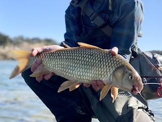 Carpsucker, River Carpsucker, Carpsucker on the Fly, Trash Fish, Roughfish, Trash fish on the fly, fly fishing in texas, Texas fly fishing