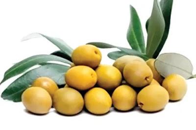 Olive Fruit - Olive Fruit in Hindi