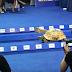 insólito: Tortuga que se hace viral por ganarle carrera a una liebre