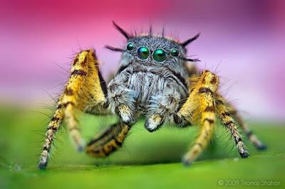 Imagen de simpatica arañita