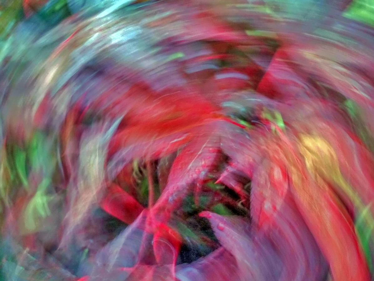 ICM: Intentional Camera Movement (4)