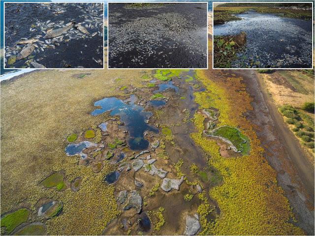Θεσπρωτία: Νεκροταφείο η λίμνη με τα νούφαρα (ΦΩΤΟ+ΒΙΝΤΕΟ)