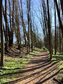 Passem el bosc