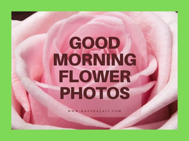 good morning flowers images for whatsapp status