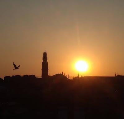 pôr do sol em frente à torre dos Clérigos e gaivota a voar