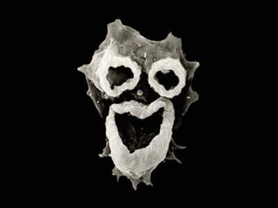 Image showing Brain-eating Amoeba Enters the Brain from the Human Nasal Cavity