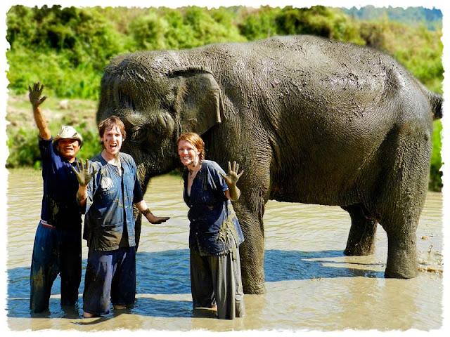 Muddy Elephant, Chiang Mai Elephant Camp, Thailand, Mahout Training, mudbath