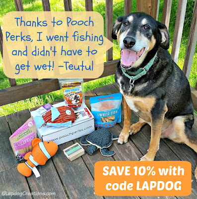 Teutul went fishing and didn't even have to get wet, thanks to #PoochPerks You can SAVE 10% off with #couponcode LAPDOG #dogsubscriptionbox #LapdogCreations ©LapdogCreations