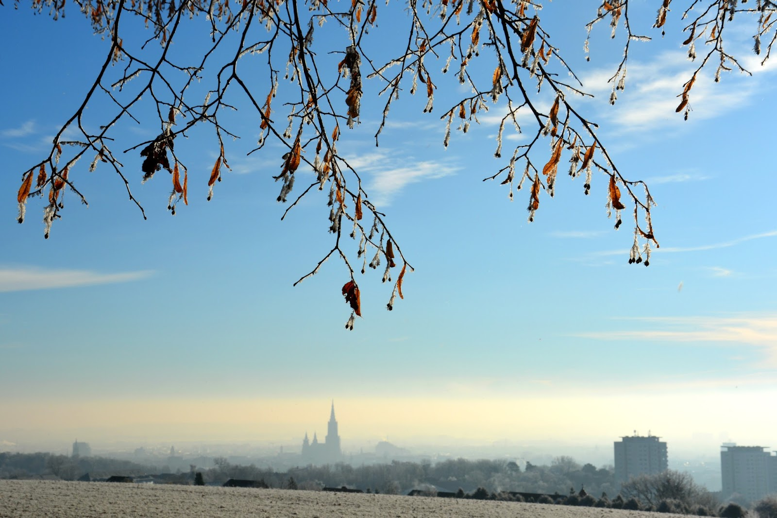 view of Ulm with the Münster and a few branches