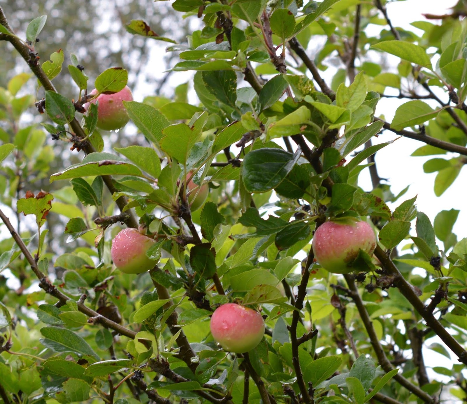 Coastal Adventures in Northumberland with Parkdean Resorts - Druridge Bay apple tree