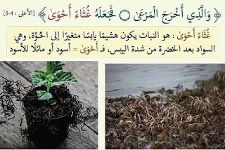 لفهم آيات القرآن الكريم 26.jpg