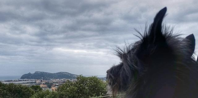 Cane ammira panorama Cagliari
