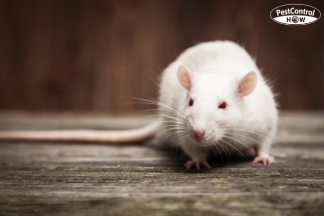 how-do-you-know-when-all-the-mice-are-gone