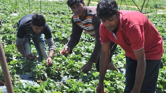 Ερώτηση βουλευτών ΣΥΡΙΖΑ για την εξασφάλιση διαθεσιμότητας εργατών γης στις αγροτικές καλλιέργειες