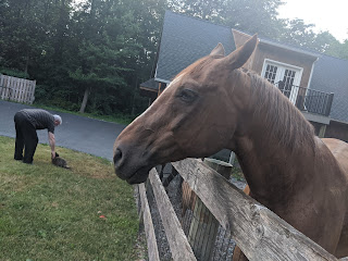 horse at fence