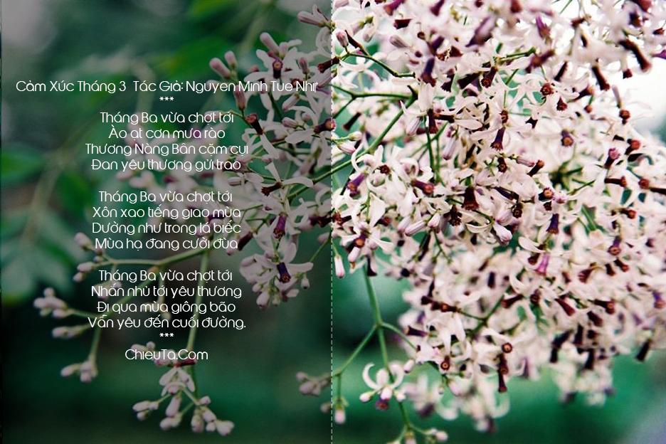 Thơ Tháng 3, Chùm Thơ Tình Tháng Ba Với Tình Khúc Lãng Mạn Nhất