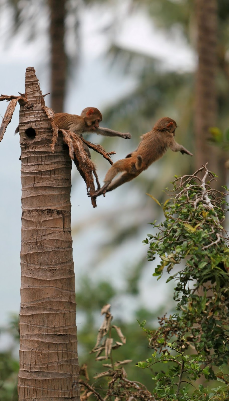 Young monkeys being adventurous