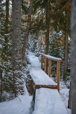 Rundweg Kreuzotter | Hochmoor Filzwald / Kloster Filz | Nationalpark Bayerischer Wald 10