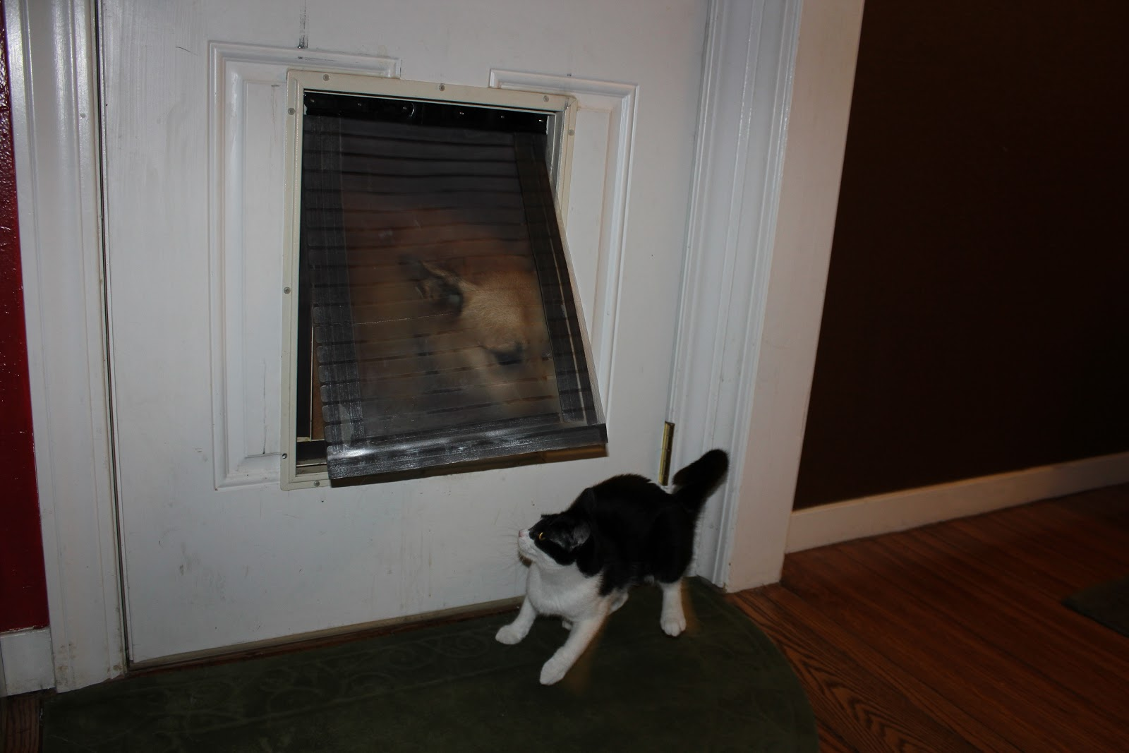 Content Provider Homemade Magnetic Dog Flap Nirvana
