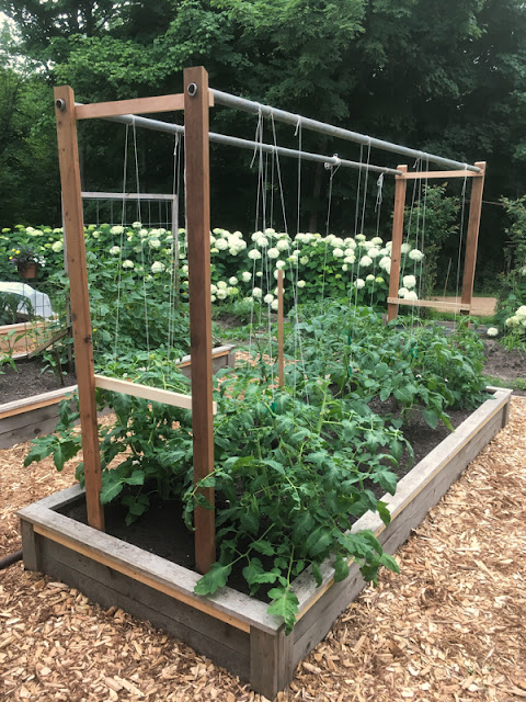 tomato support system western red cedar raised beds