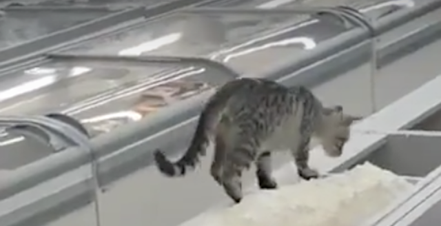 she went to the store to buy some sugar then she sees a cat doing something in the sugar bin