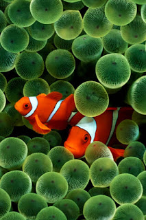 finding-nemo-dp