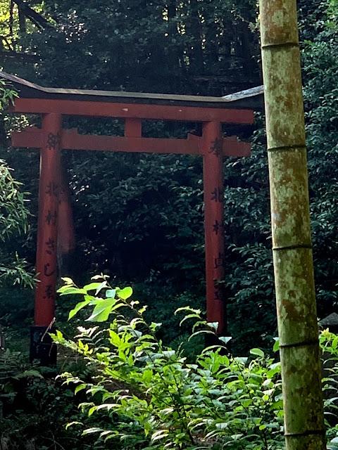 #大岩神社 #廃墟 #マムシ
