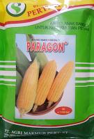 benih jagung paragon,jagung paragon,benih jagung manis,benih jagung,budidaya jagung,budidaya jagung manis