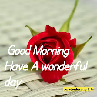 Good morning wishes with flowers images