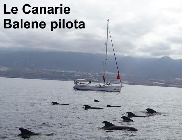 canarie balene