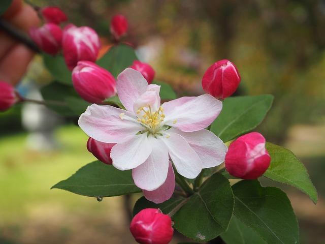 y nghia hoa hai duong