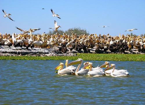 AIRE MARINE PROTÉGÉE DE NIAMONE-KALOUNAYES : Parc, animaux, visite, tourisme, sauvage, oiseaux, LEUKSENEGAL, Dakar, Sénégal, Afrique