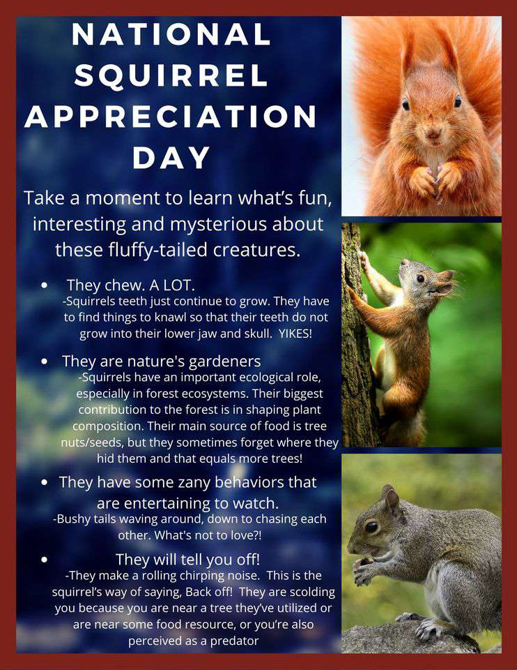 National Squirrel Appreciation Day Wishes Awesome Picture
