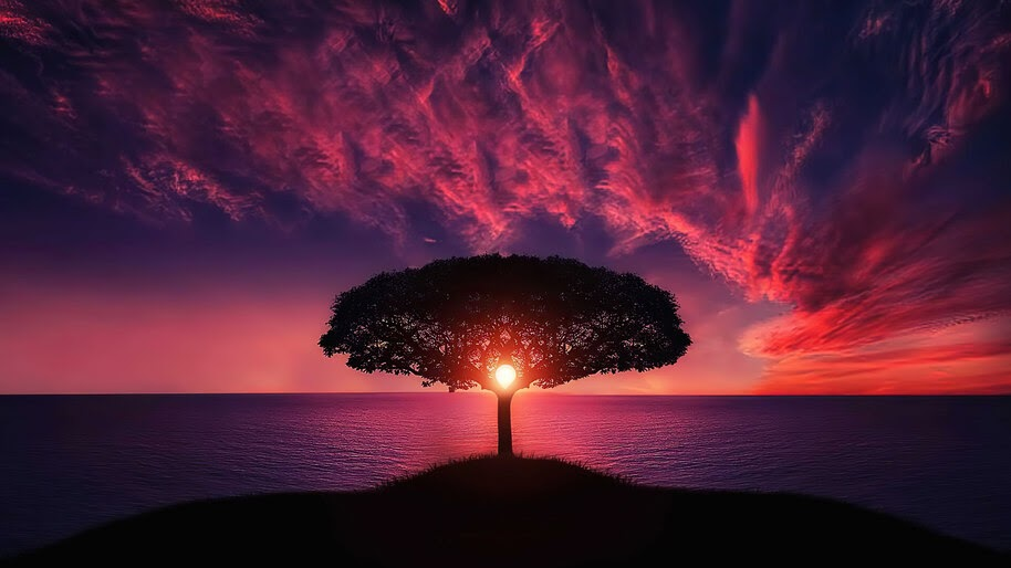 Sea, Sunset, Sky, Tree, Scenery, Horizon, 4K, #6.963