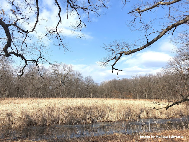 A blend of ecosystems at Somme Woods.