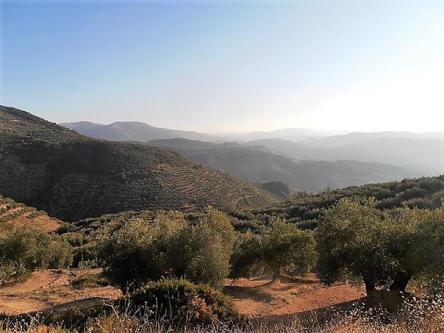 Olive Groves, Sierra Sur de Jaen, Andalusia, Jaen