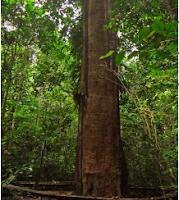 Desain Rumah Kayu Ulin Dari Kalimantan